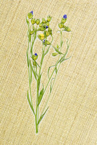 linen fabric and flax plant